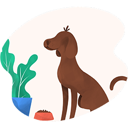 Evcil Hayvanlar İçin Tam Güvence